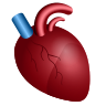 Anatomical Heart icon